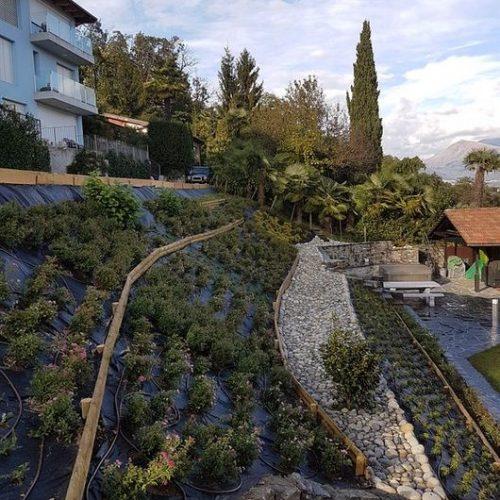 sempreverde giardini